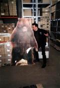 1999 Velvetone Ray im Lager der Bären
